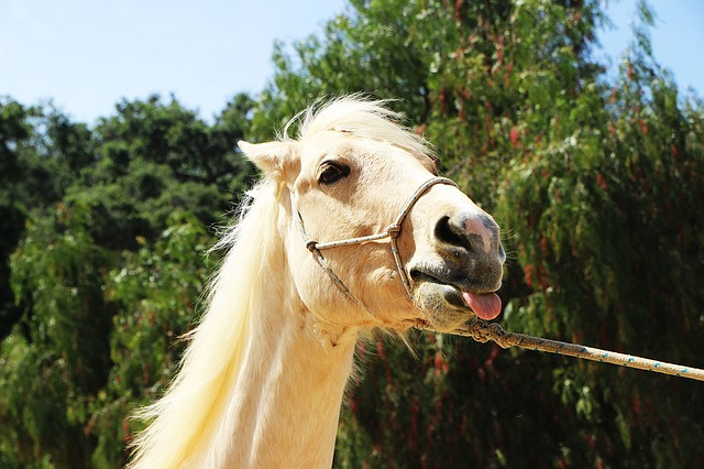 horse-1506639_640.jpg
