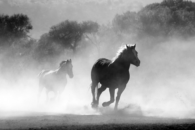 horse-430441_640.jpg