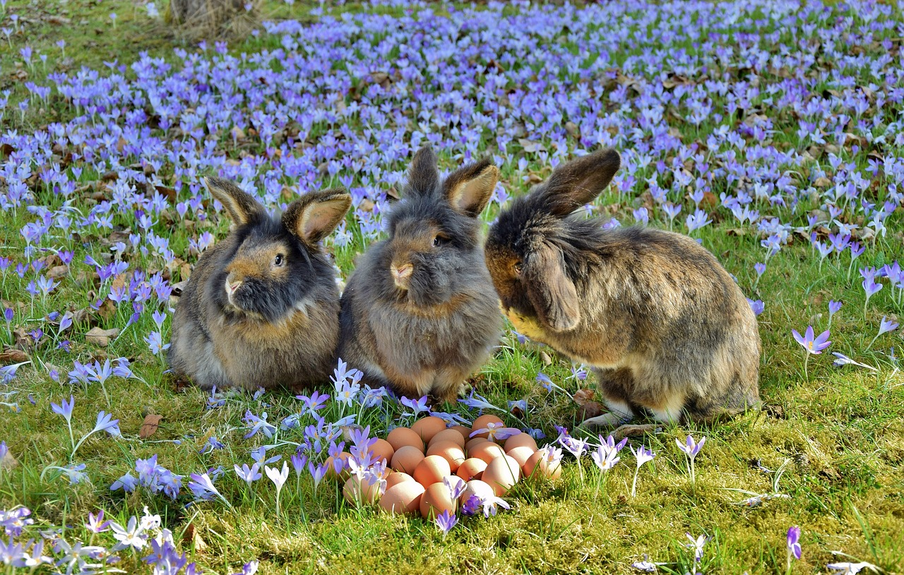 rabbit-3259861_1280.jpg