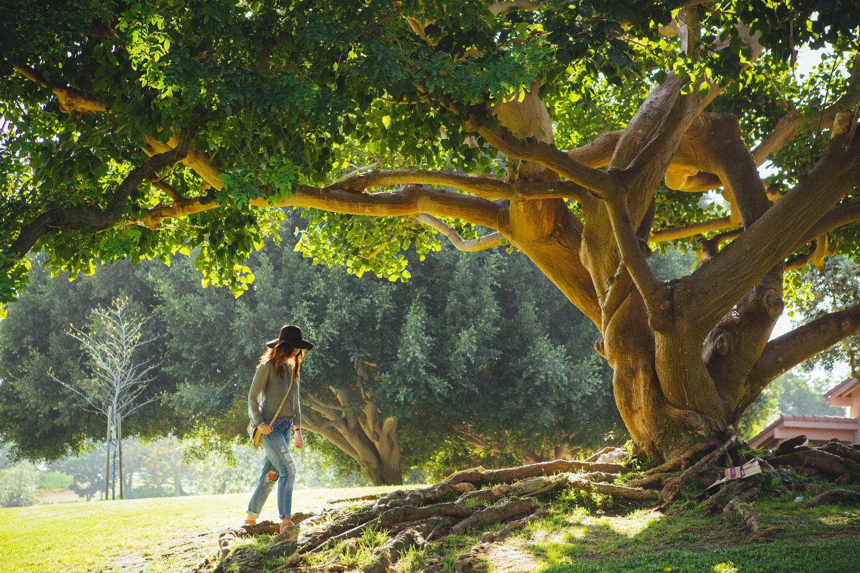 tree_roots_lake_2.jpg