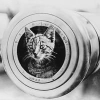 Macskák és macskafélék a hadtörténelemben