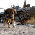 Szovjet hadiipar: a BMP-2
