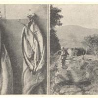 Gergely István, a kertész-lepkész