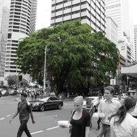 Ha sok fa van a környékeden, hét évvel többet élsz egészségesen
