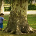 A tízezer fa csak az első lépés
