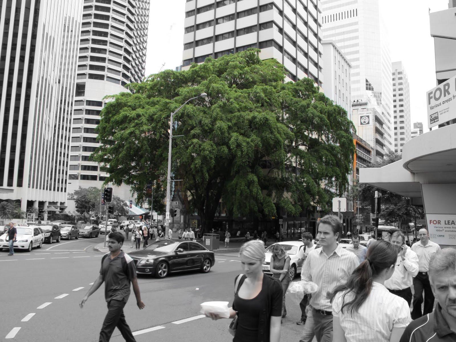 brisbane-city_tree.jpeg