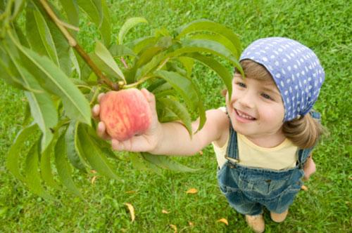 fruit-picking-at-the-farm.jpg