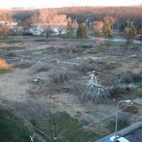 Egy kisebb erdő, 68 fa szomorú kiírtása a Lidl miatt :-(
