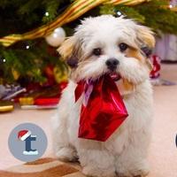 Lépj időben! Duplázd meg a követőidet és a forgalmadat a karácsonyi hajrában!