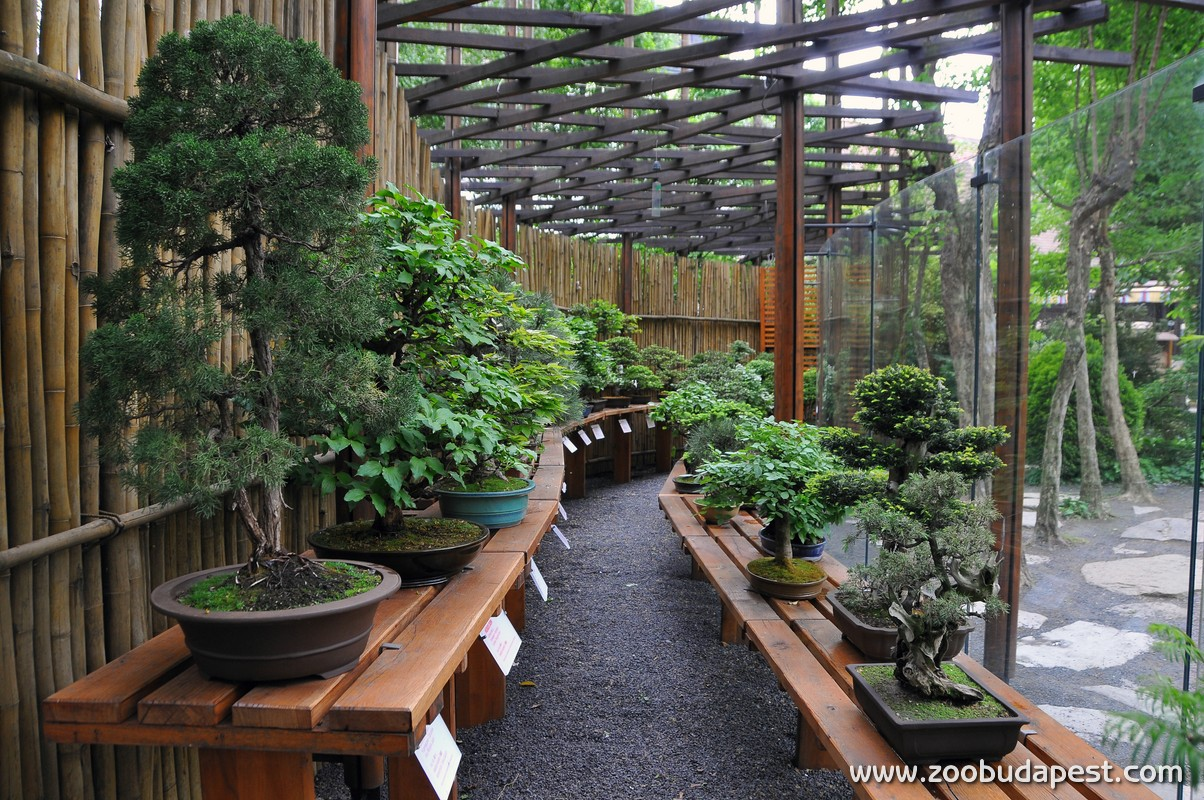 Bonsai gyűjtemény