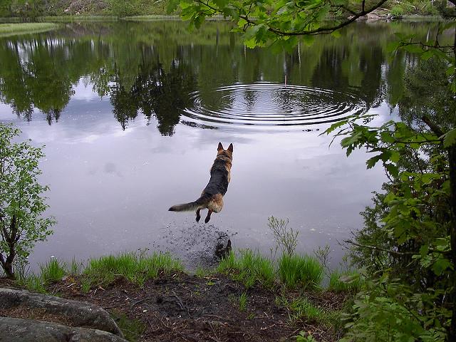 dog-jumping.jpg