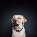 Tiszteld, mert kutya!