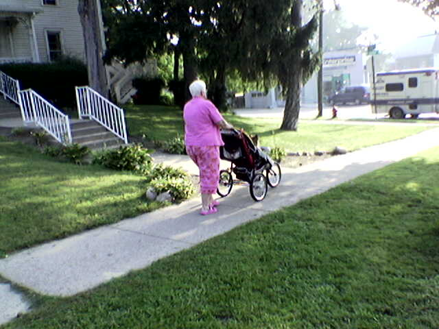 dog-in-stroller.jpg