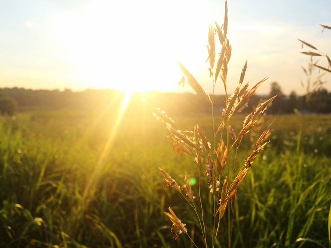 sunny-side.jpg