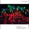Új folyóirat: Mucosal Immunology