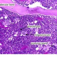 Az őssejtek nyomában