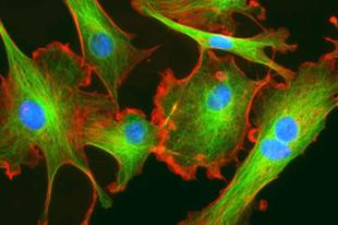 Mérföldkő az őssejtkutatásban