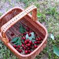Kézi mechanikus cseresznyemagozó kapacitása - kiszámítottam