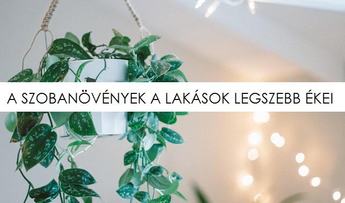 novenyek_lbf_lead.jpg