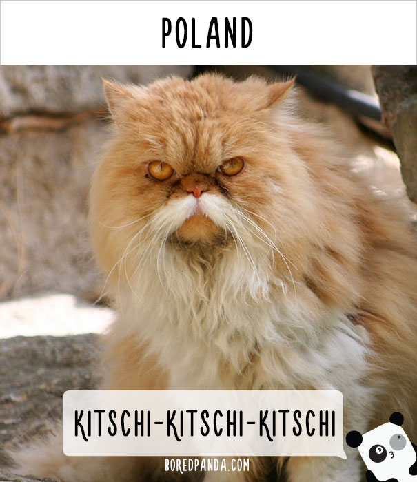 how-people-call-cats-in-poland-1.jpg