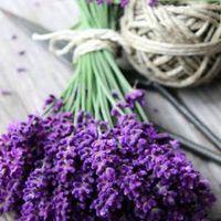 Virágevésre fel! Minden, amit az ehető virágokról tudni kell