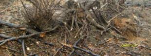 Erdőírtás