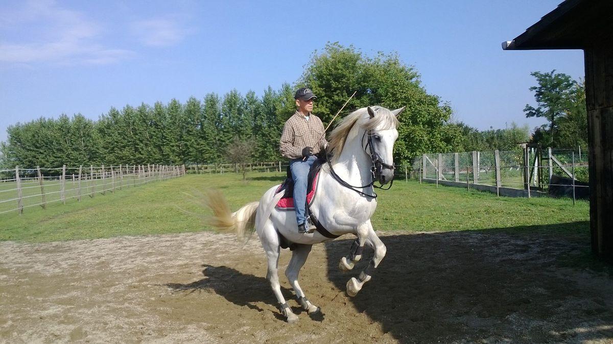 vaquero-ma1200.jpg