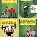 Tale of the 4-legged ladybug