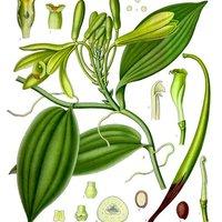 Vaníliás borvacsorát abszolváltunk az Artesano-ban
