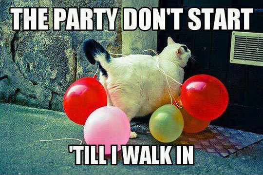 cool-cat-balloons-party.jpg