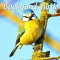 ,,PDF,, 2017 Backyard Birds Mini Calendar. Books awesome ready Carrier dominio Hoteles