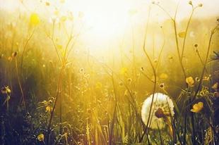 8 dal tavaszi megújuláshoz