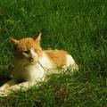 5 érdekesség amit valószínűleg nem tudtál a macskákról!