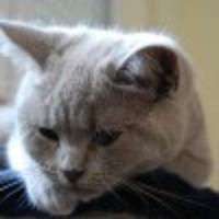 A bánatos, az exhibicionista és az önfeláldozó cica
