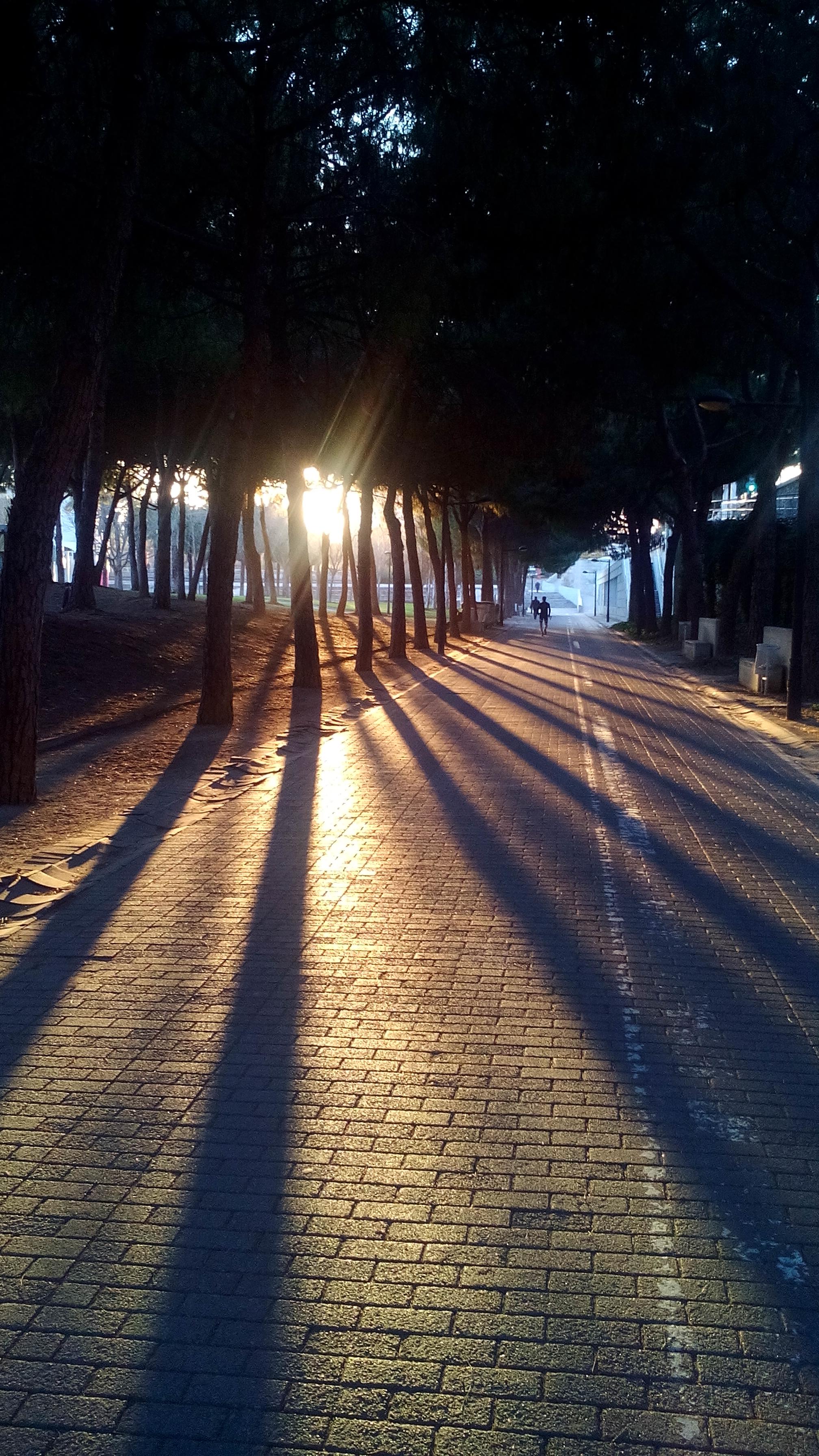 park a lemenő nap fényéban