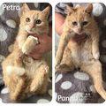 Petra és Panna még mindig gazdit keres!