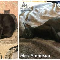 Miss Anorexya még mindig gazdit keres!