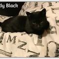 Lady Black még mindig gazdit keres!