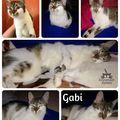 Gabi még mindig gazdit keres!