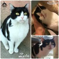 Zita még mindig gazdit keres!