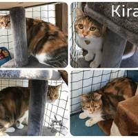 Kira még mindig gazdit keres!