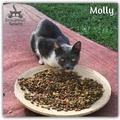 Molly még mindig gazdit keres!