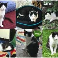 Cirmi még mindig gazdit keres!
