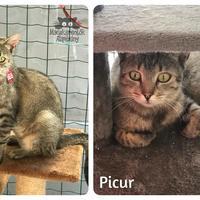 Picur még mindig gazdit keres!