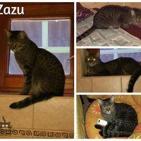 Zazu még mindig gazdit keres!