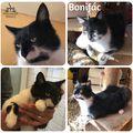 Bonifác még mindig gazdit keres!