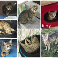 Kitty még mindig gazdit keres!