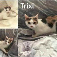 Trixi még mindig gazdit keres!