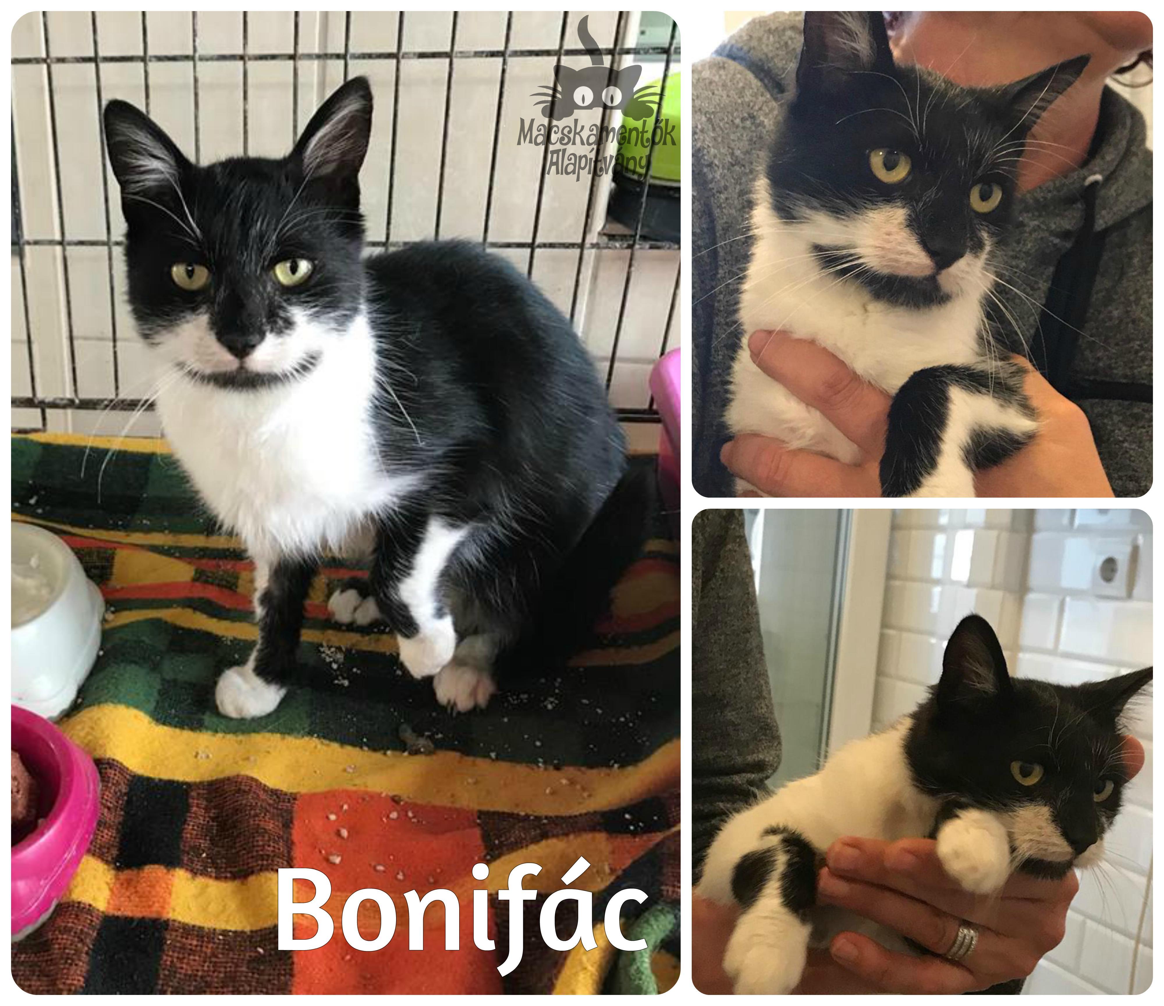 bonifac1030_bf.jpg