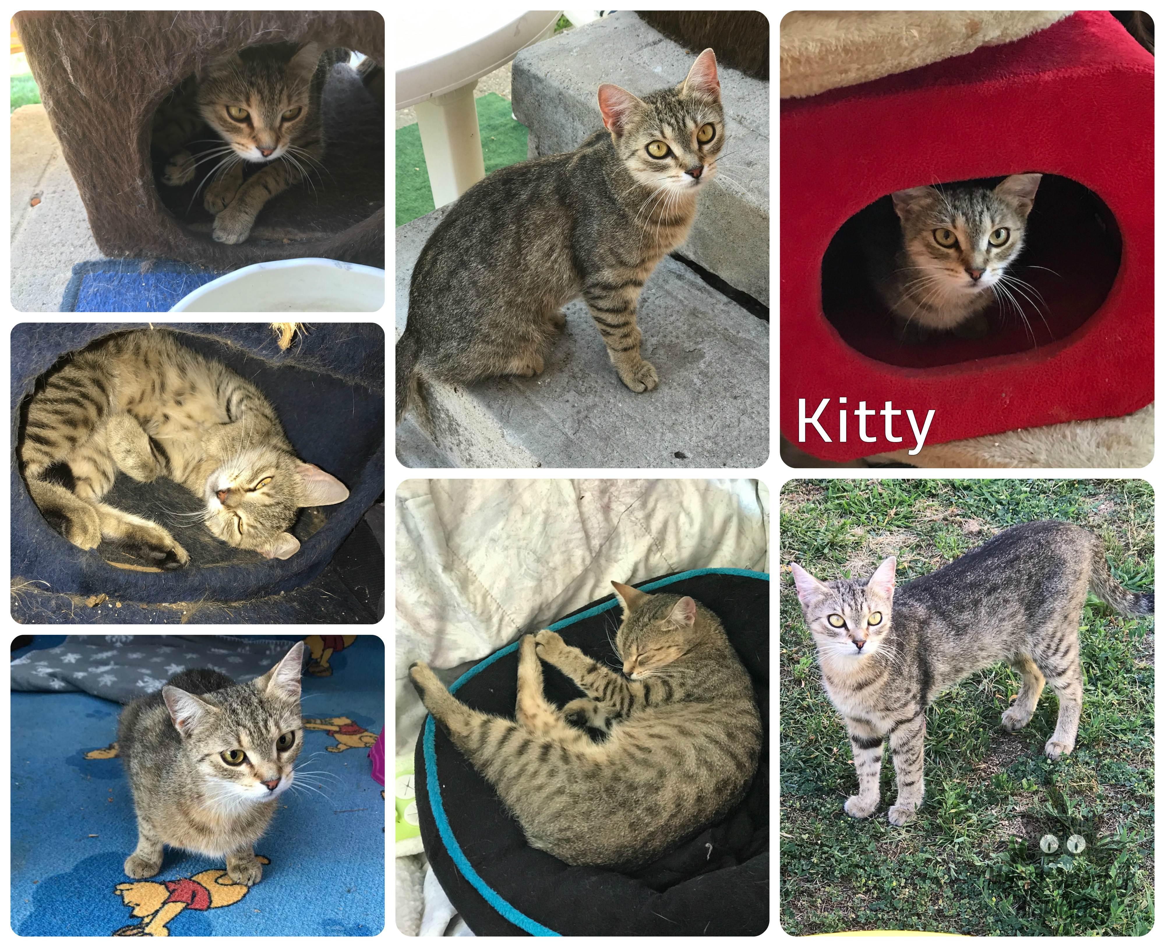 kitty_0731.jpg